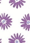 Coming Up Daisies Lavender/Blue Printed Cellophane Roll, 40
