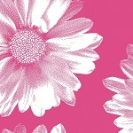 Big Flower Hot Pink Printed Tissue Paper (20