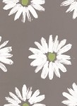 Coming Up Daisies White/Green Printed Cellophane Roll, 100' L