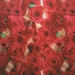 Red Roses Printed Tissue Paper (20